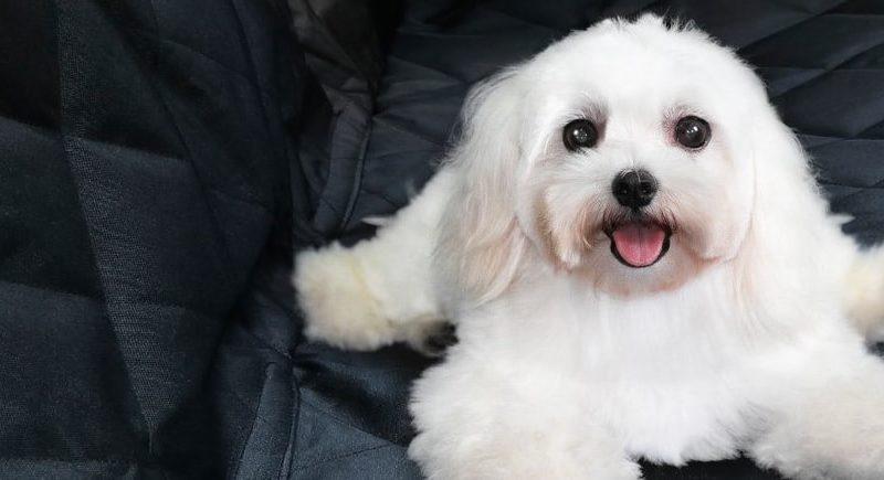 Housse de protection banquette arrière anti poils de chien