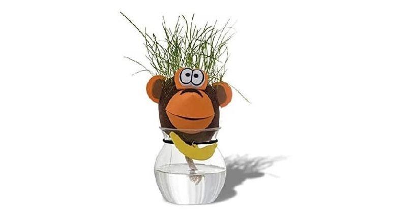 Herbe à pousser en forme de tête de singe